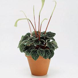 Fidanları ıç mekan bitkileri çiçekli bitkiler yapraklı bitkiler